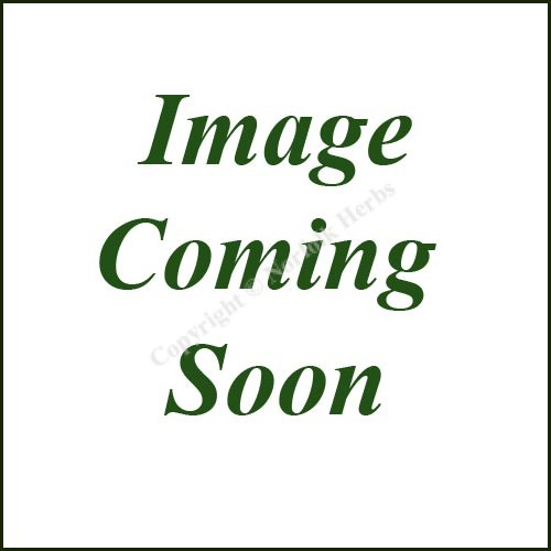 Rosemary, Foxtail - Rosmarinus officinalis Foxtail